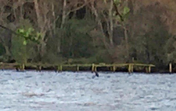 Quái vật hồ Loch Ness và những sự thật chưa kể về huyền thoại gây tranh cãi nhất lịch sử - Ảnh 6.