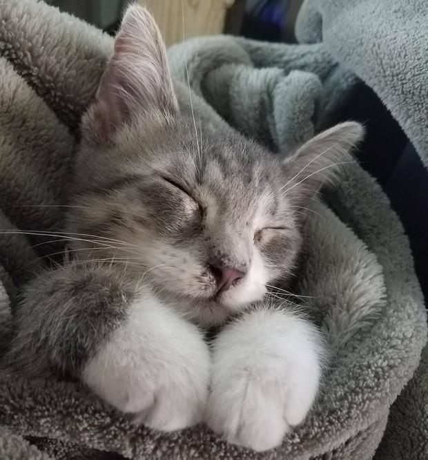Chân dung 15 boss mèo lười nhác chỉ thích nằm cuộn tròn trong chăn - Ảnh 13.