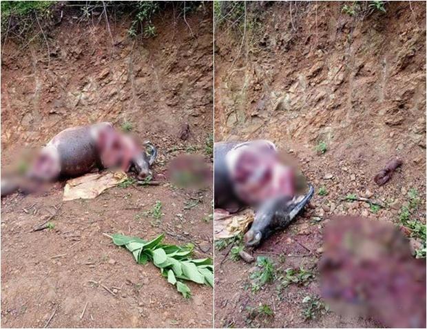 Lạng Sơn: Kẻ trộm lẻn vào nhà dân bắt trâu rồi mang ra ven quốc lộ xẻ thịt - Ảnh 1.