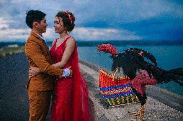 Ảnh cưới của chú rể mê gà chọi, chụp kiểu gì cũng được miễn là phải có gà - Ảnh 3.