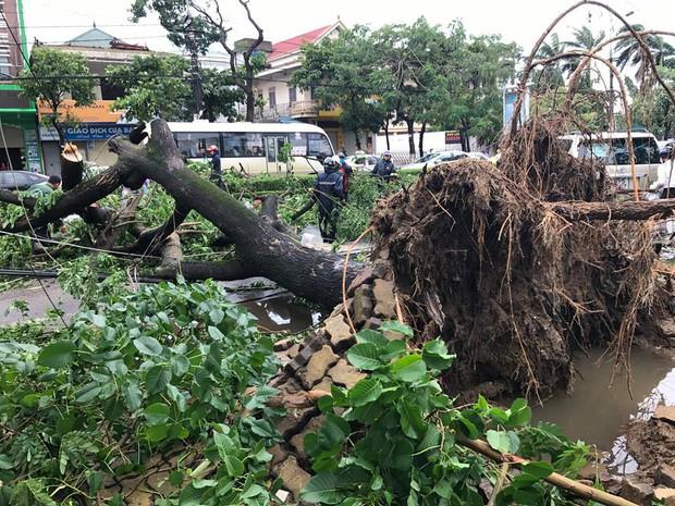 Chùm ảnh: Đường phố TP Vinh - Nghệ An tan hoang sau bão số 2 - Ảnh 5.