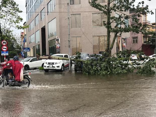 Chùm ảnh: Đường phố TP Vinh - Nghệ An tan hoang sau bão số 2 - Ảnh 12.