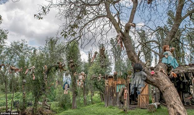 Cơn ác mộng Isla de las Munecas: Hòn đảo với hàng nghìn con búp bê kinh dị được treo lủng lẳng trên cây - Ảnh 1.