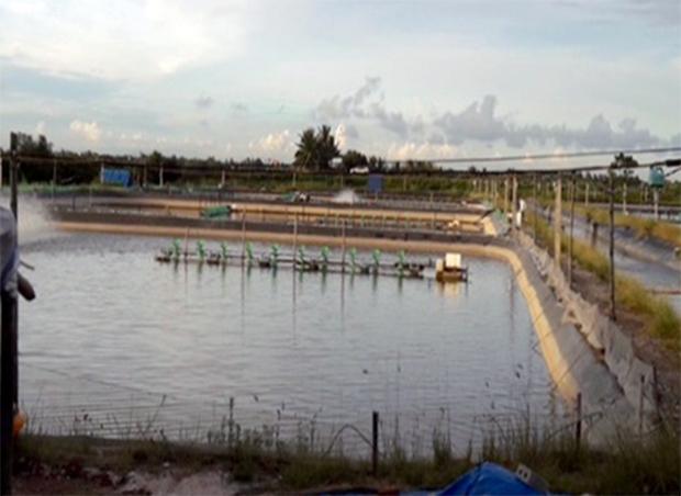 Hơn 3 tấn tôm chết bất thường nghi bị đổ thuốc trừ sâu - Ảnh 2.