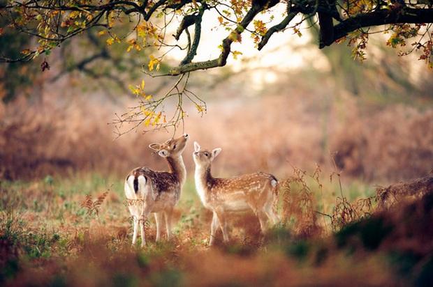 17 khoảnh khắc hồn nhiên giữa trời thu của các bé động vật - Ảnh 25.