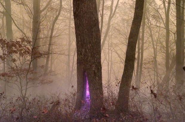 Những bức ảnh khó tin cho thấy thiên nhiên có quá nhiều điều kỳ diệu - Ảnh 14.