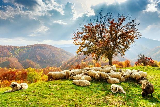 17 khoảnh khắc hồn nhiên giữa trời thu của các bé động vật - Ảnh 31.
