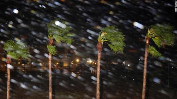 Mỹ: Cá sấu đi tránh bão Harvey - Ảnh 4.