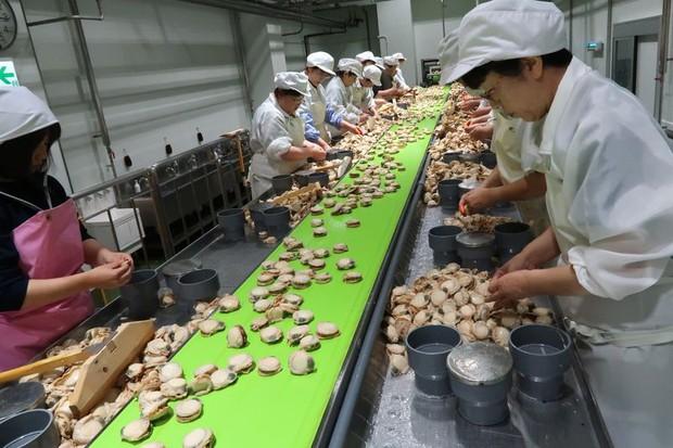 Ngôi làng giàu nhất Nhật Bản tuyển người nhưng chẳng ai muốn làm việc - Ảnh 4.