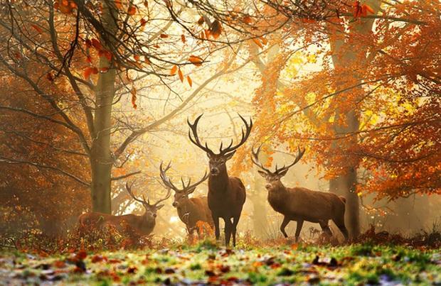 17 khoảnh khắc hồn nhiên giữa trời thu của các bé động vật - Ảnh 7.