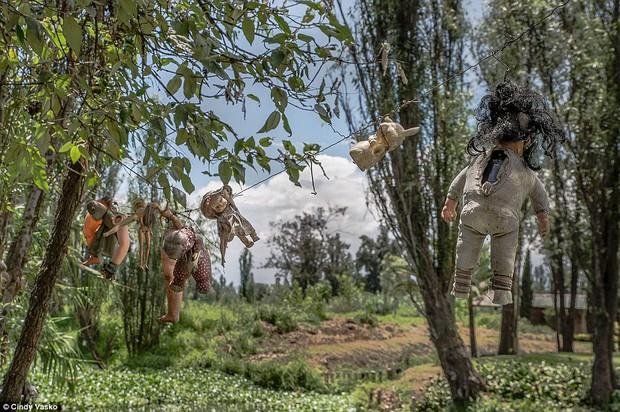 Cơn ác mộng Isla de las Munecas: Hòn đảo với hàng nghìn con búp bê kinh dị được treo lủng lẳng trên cây - Ảnh 14.