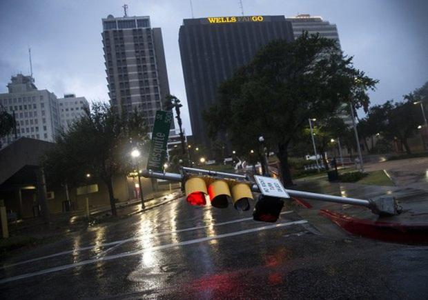 Mỹ: Cá sấu đi tránh bão Harvey - Ảnh 5.