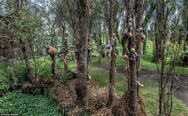 Cơn ác mộng Isla de las Munecas: Hòn đảo với hàng nghìn con búp bê kinh dị được treo lủng lẳng trên cây - Ảnh 5.