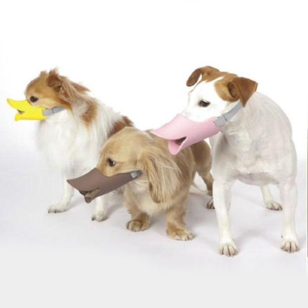 Ngỡ chỉ có ở thời hiện đại nhưng ai ngờ luật bắt rọ mõm cún cưng khi ra đường đã xuất hiện từ thời cổ đại - Ảnh 6.