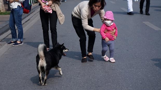 Nhìn cách quản lý thú cưng ngặt nghèo ở các nước phương Tây mới thấy cún ta vẫn còn sướng chán! - Ảnh 9.