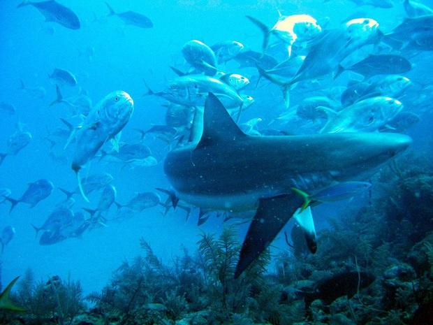 Phát hiện hố xanh khổng lồ giữa lòng đại dương nhưng thứ ẩn chứa trong đó còn đáng kinh ngạc hơn - Ảnh 7.