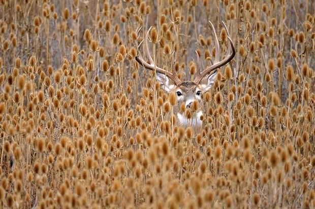 17 khoảnh khắc hồn nhiên giữa trời thu của các bé động vật - Ảnh 19.