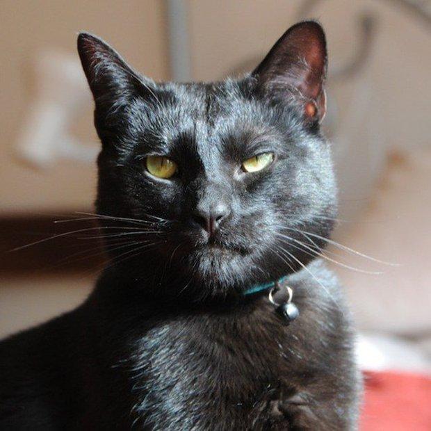 Gặp gỡ chú mèo mặt cáu kỉnh lúc nào cũng như đang hờn cả thế giới - Ảnh 1.