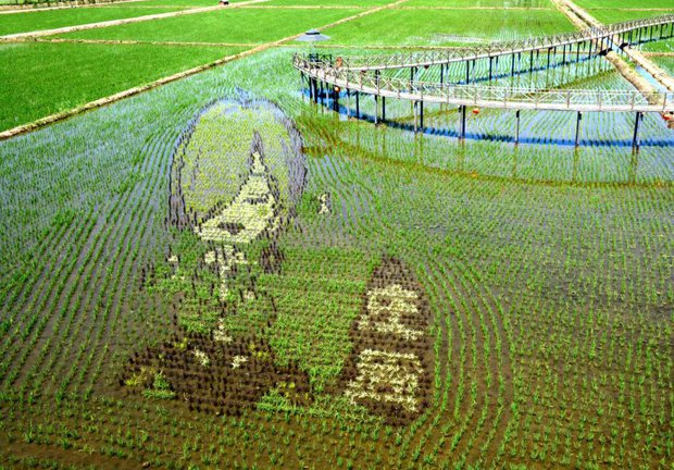 Những bức tranh 3D tuyệt đẹp được vẽ trên đồng lúa của nông dân Trung Quốc - Ảnh 2.