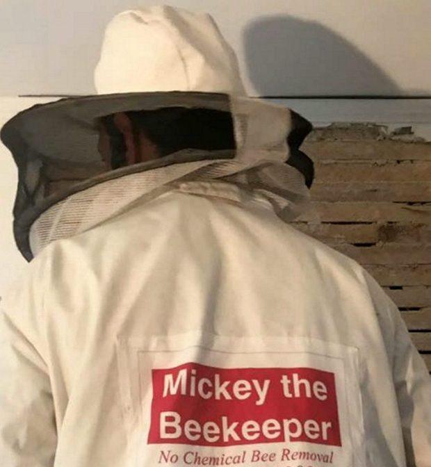 Thấy chất lỏng kỳ lạ trên tường, người phụ nữ bàng hoàng phát hiện 35 nghìn con ong ở nhờ trên trần nhà suốt 2 năm - Ảnh 5.