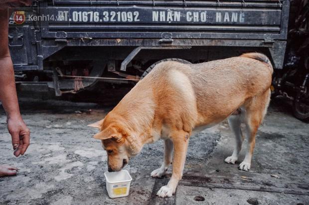 Gặp Gấu - chú chó cá tính nhất Sài Gòn: Chủ mua gì cũng xung phong xách hộ, không cho theo thì hờn mát bỏ ăn! - Ảnh 9.