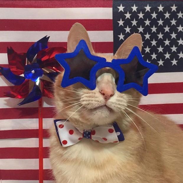 15 chú mèo bảnh trai ăn diện nhất trong ngày quốc tế mèo - Ảnh 11.