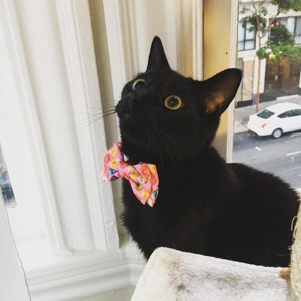 15 chú mèo bảnh trai ăn diện nhất trong ngày quốc tế mèo - Ảnh 9.