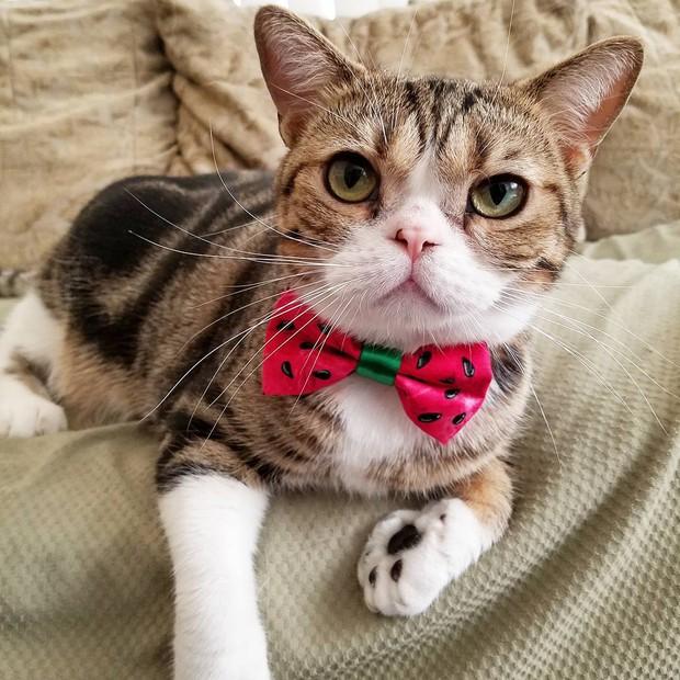 15 chú mèo bảnh trai ăn diện nhất trong ngày quốc tế mèo - Ảnh 5.