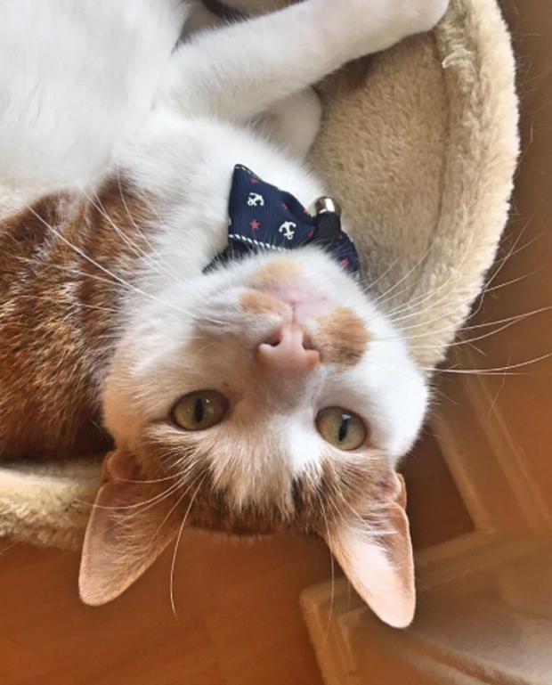 15 chú mèo bảnh trai ăn diện nhất trong ngày quốc tế mèo - Ảnh 25.
