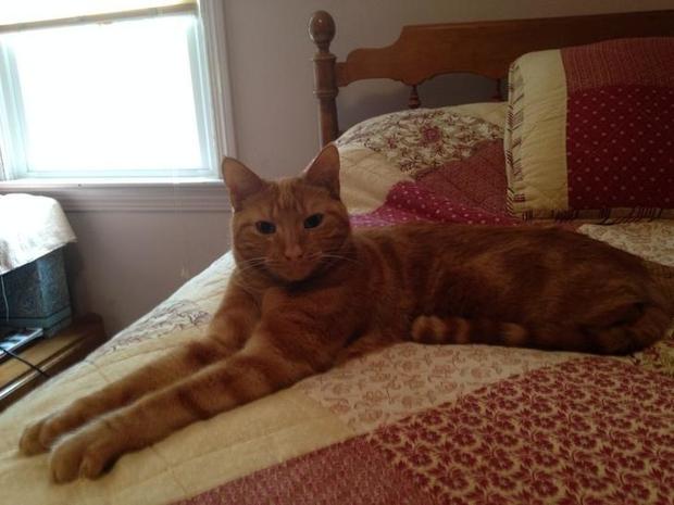 Chân dung 17 con mèo to xác khiến con người cũng phát hoảng - Ảnh 3.