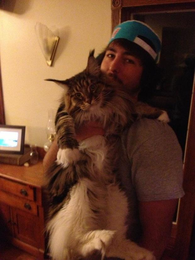 Chân dung 17 con mèo to xác khiến con người cũng phát hoảng - Ảnh 9.