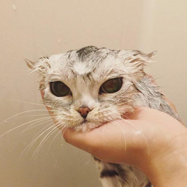 Bấn loạn với chú mèo đáng yêu có đôi mắt long lanh như đeo lens - Ảnh 11.