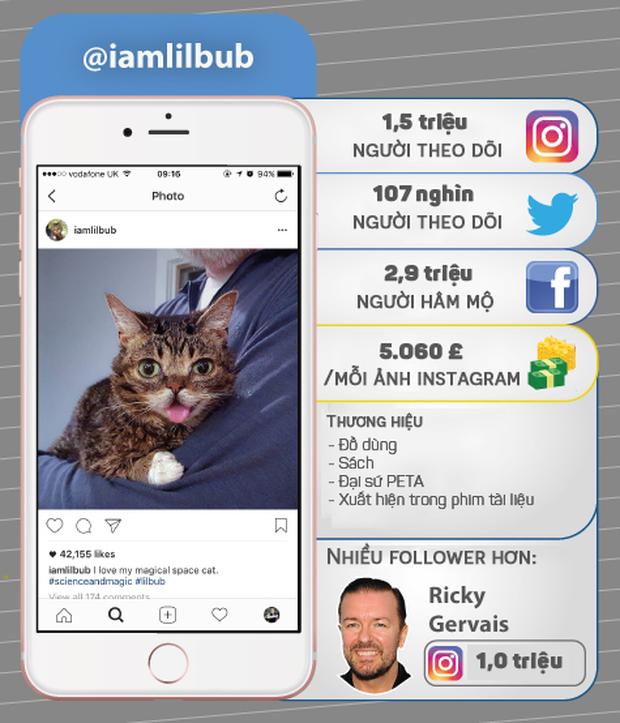 7 thú cưng cute lạc lối nổi đình đám trên Instagram nhất định bạn nên ghé thăm - Ảnh 6.