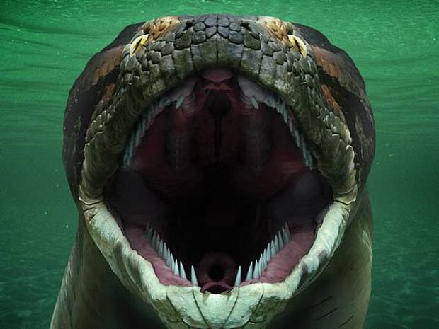Nghĩ trăn Anaconda là ghê gớm? Có một loài trăn còn khủng bố gấp 2 lần cơ! - Ảnh 1.