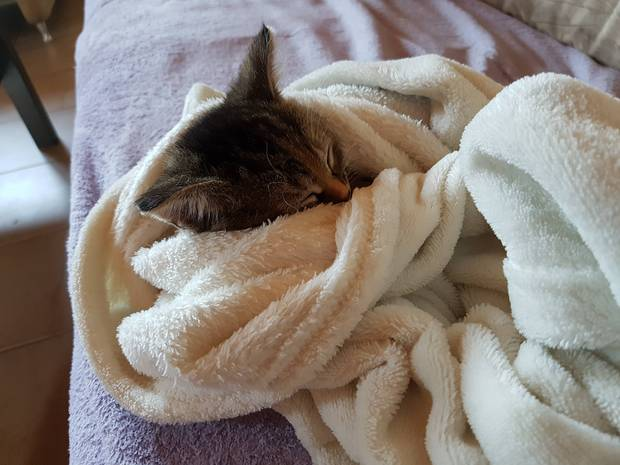 Chân dung 15 boss mèo lười nhác chỉ thích nằm cuộn tròn trong chăn - Ảnh 25.