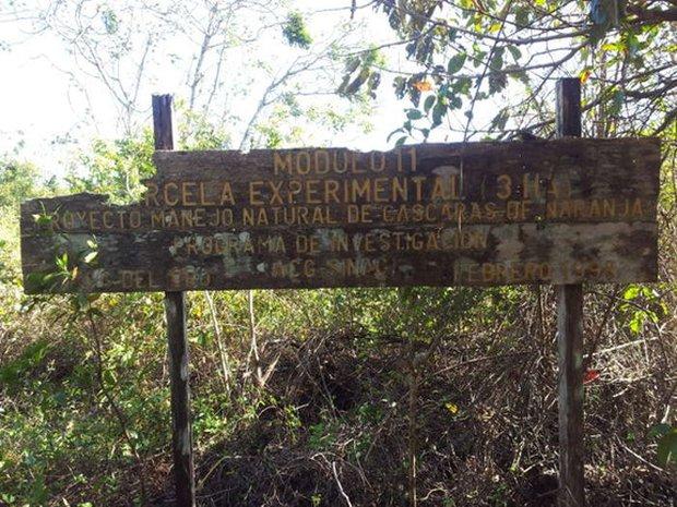 Một công ty nước ép đổ 12.000 tấn vỏ cam xuống khu bảo tồn thiên nhiên, 19 năm sau, đây là kết quả họ đạt được - Ảnh 5.