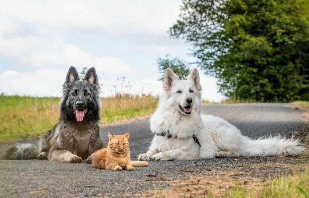 Tôi cứu thằng mèo về nuôi cùng lũ chó, rồi nó quên mình là ai luôn: Chuyện về con mèo tưởng mình là chó đang gây sốt mạng xã hội  - Ảnh 1.