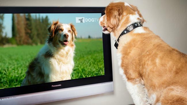 Chó nhà bạn thấy những gì khi ngồi xem TV? - Ảnh 1.