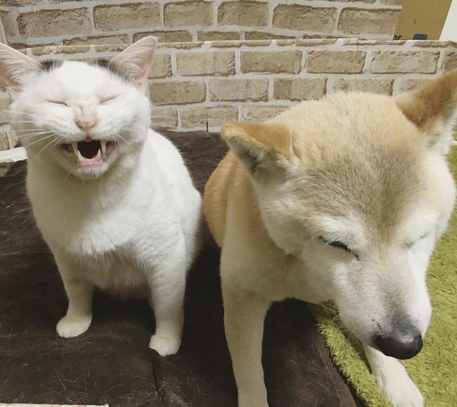 Tình bạn đẹp nhất Trái đất giữa anh mèo chảnh choẹ và chú chó già - Ảnh 11.
