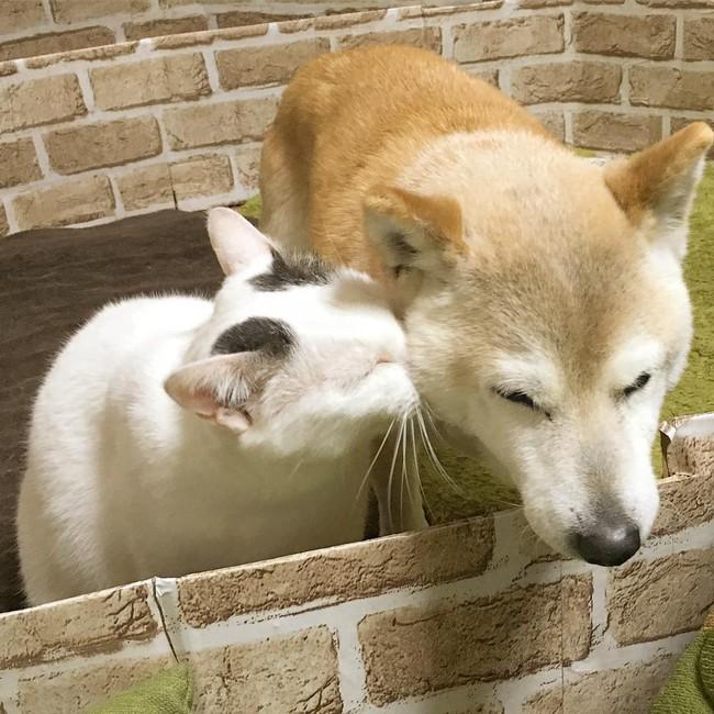 Tình bạn đẹp nhất Trái đất giữa anh mèo chảnh choẹ và chú chó già - Ảnh 12.
