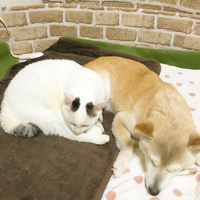 Tình bạn đẹp nhất Trái đất giữa anh mèo chảnh choẹ và chú chó già - Ảnh 7.