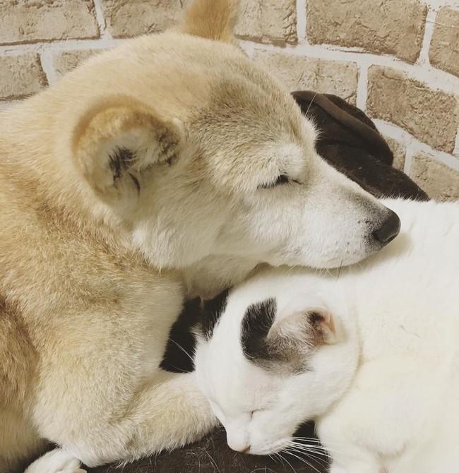 Tình bạn đẹp nhất Trái đất giữa anh mèo chảnh choẹ và chú chó già - Ảnh 14.