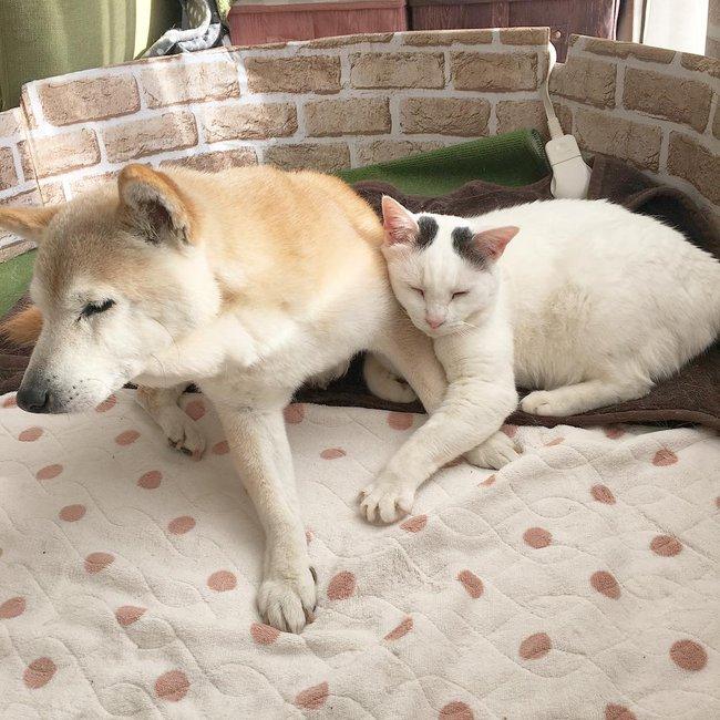 Tình bạn đẹp nhất Trái đất giữa anh mèo chảnh choẹ và chú chó già - Ảnh 16.