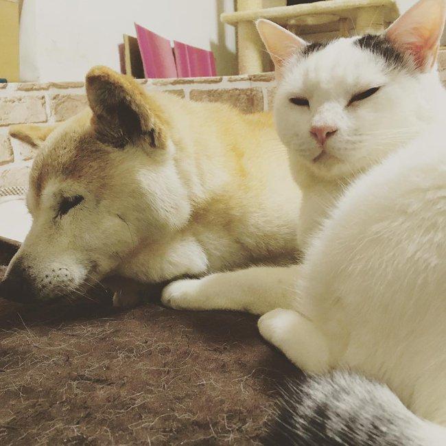Tình bạn đẹp nhất Trái đất giữa anh mèo chảnh choẹ và chú chó già - Ảnh 18.