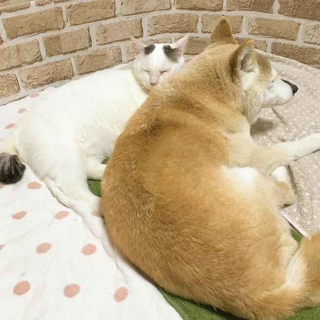 Tình bạn đẹp nhất Trái đất giữa anh mèo chảnh choẹ và chú chó già - Ảnh 19.