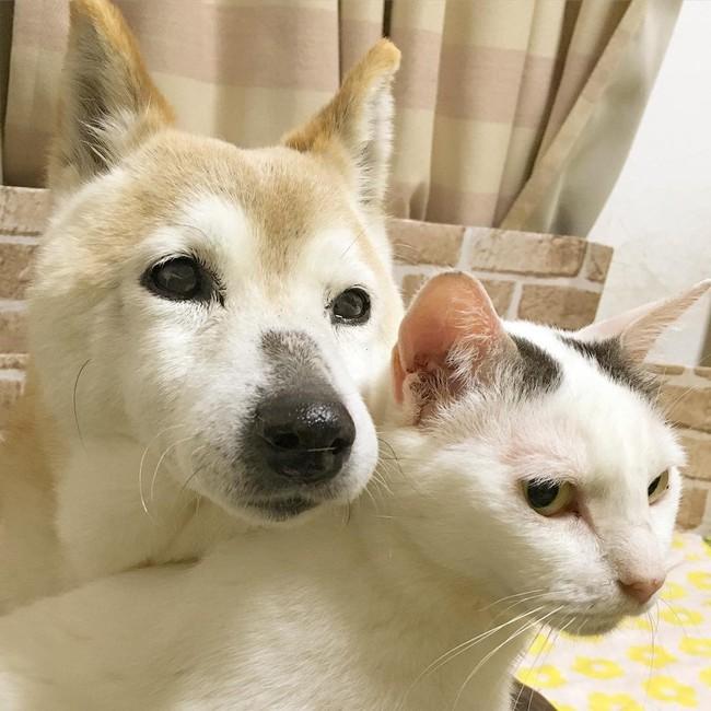 Tình bạn đẹp nhất Trái đất giữa anh mèo chảnh choẹ và chú chó già - Ảnh 21.