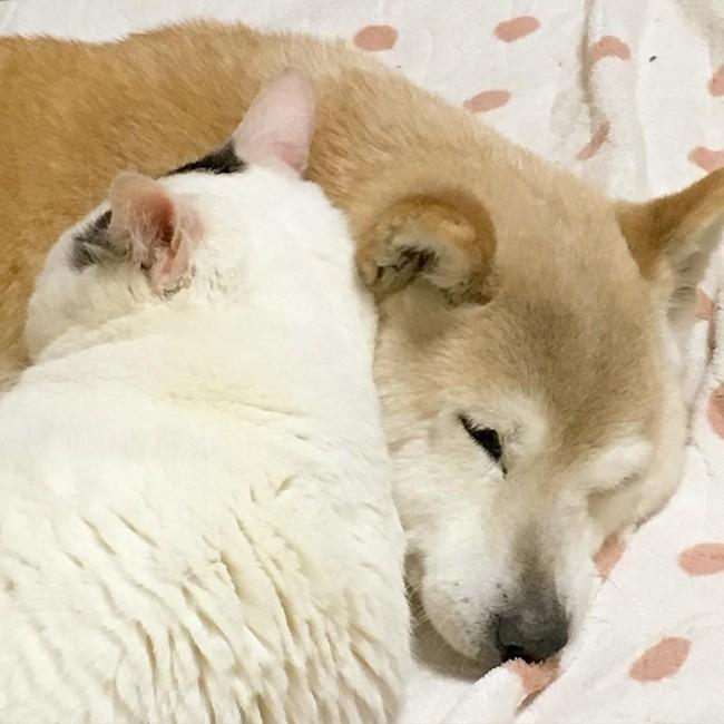 Tình bạn đẹp nhất Trái đất giữa anh mèo chảnh choẹ và chú chó già - Ảnh 22.