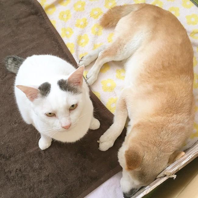 Tình bạn đẹp nhất Trái đất giữa anh mèo chảnh choẹ và chú chó già - Ảnh 5.