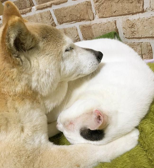 Tình bạn đẹp nhất Trái đất giữa anh mèo chảnh choẹ và chú chó già - Ảnh 24.