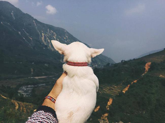 Dắt tay gấu đi muôn nơi xưa rồi, giờ phải dắt tay cún mới đúng bài cơ! - Ảnh 2.
